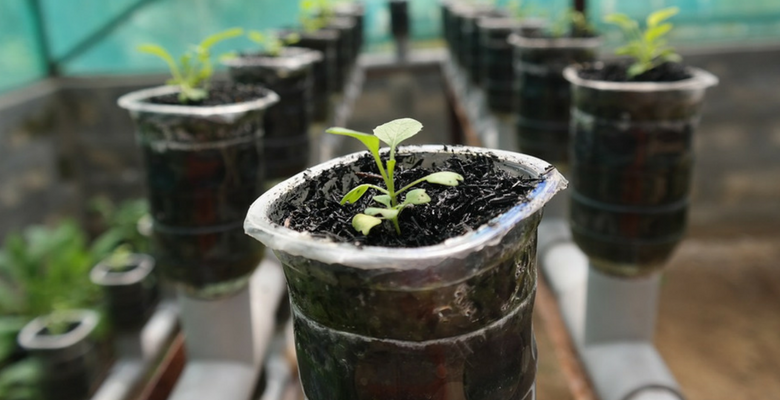 Packet Labs | Hydroponics in Goa